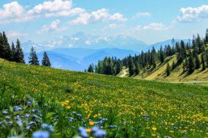 yellow, field, flowers